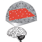 Scientists mapped neural activity patterns (white dots) in a learning brain.