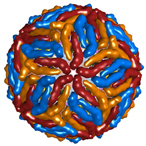 Model of the Zika virus.