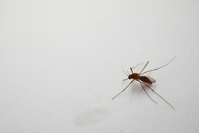 A mosquito on a smooth, white surface.