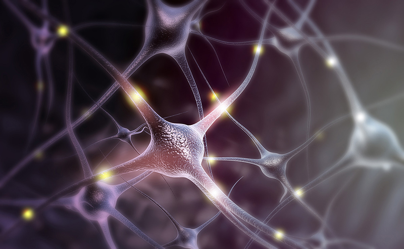 Artist conception of neurons.