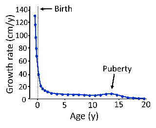 Graph showing that longitudinal bone growth slows with age and eventually ceases.