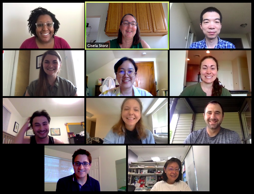 Group photo of Storz lab during Zoom meeting.