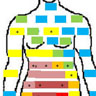 Diagram of bodily areas where women reported feeling pain.