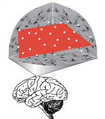 Illustration of brain area tested in study