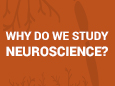Why Do We Study Neuroscience?