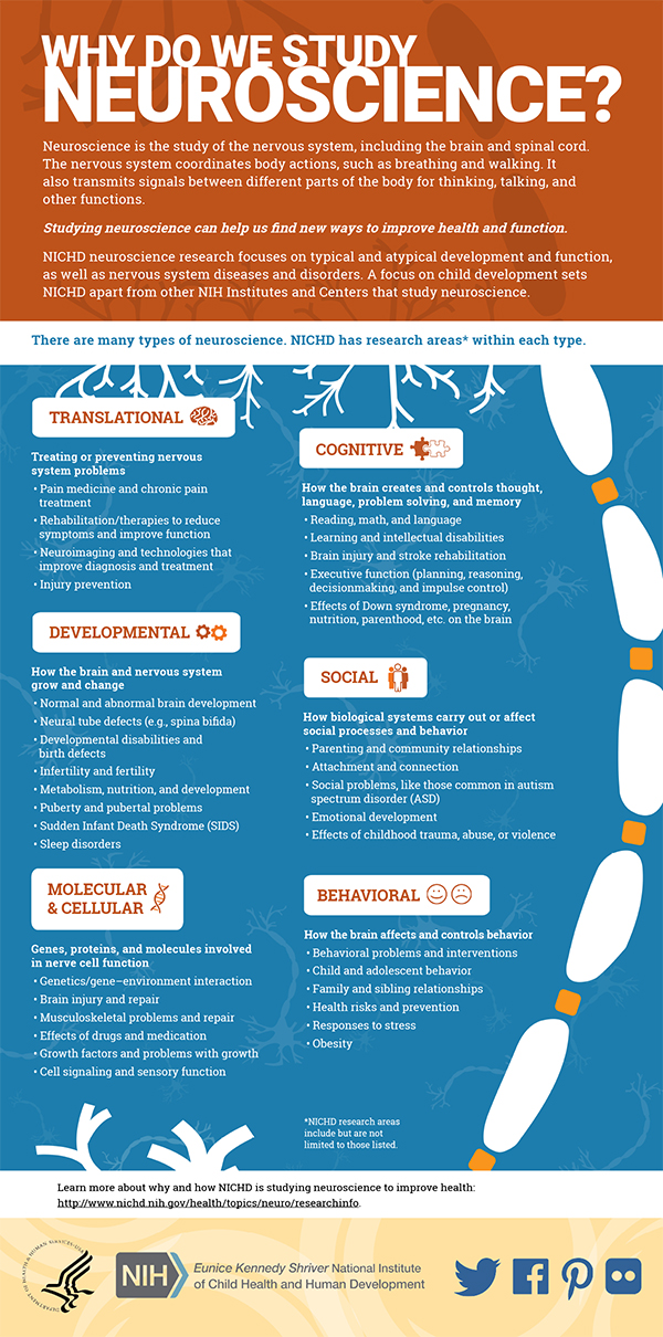 Infographic: Neuroscience