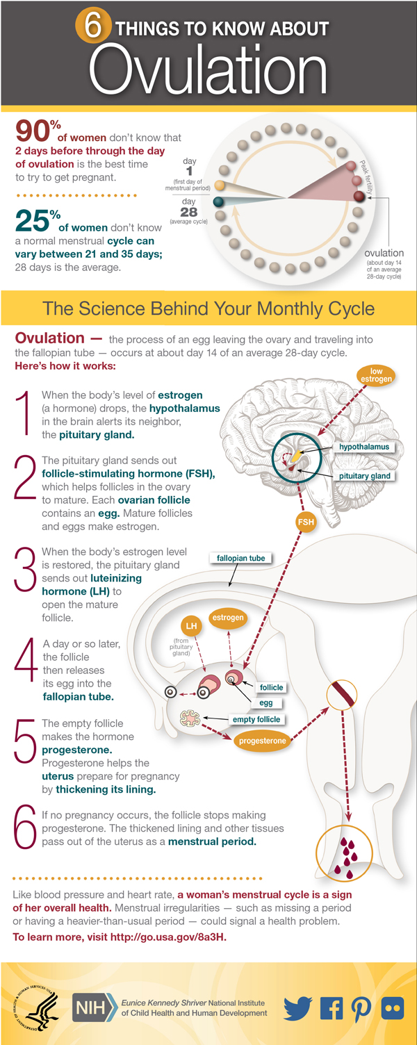 This Women's Health infographic describes ovulation and pregnancy.