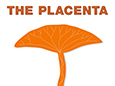 The Placenta: A Vital Organ for Baby, Mom, and Science