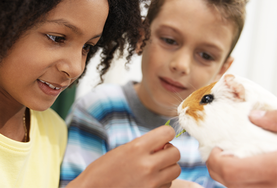 Stock image of children with guinea  pig.