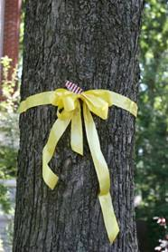 Yellow ribbon tied to a tree
